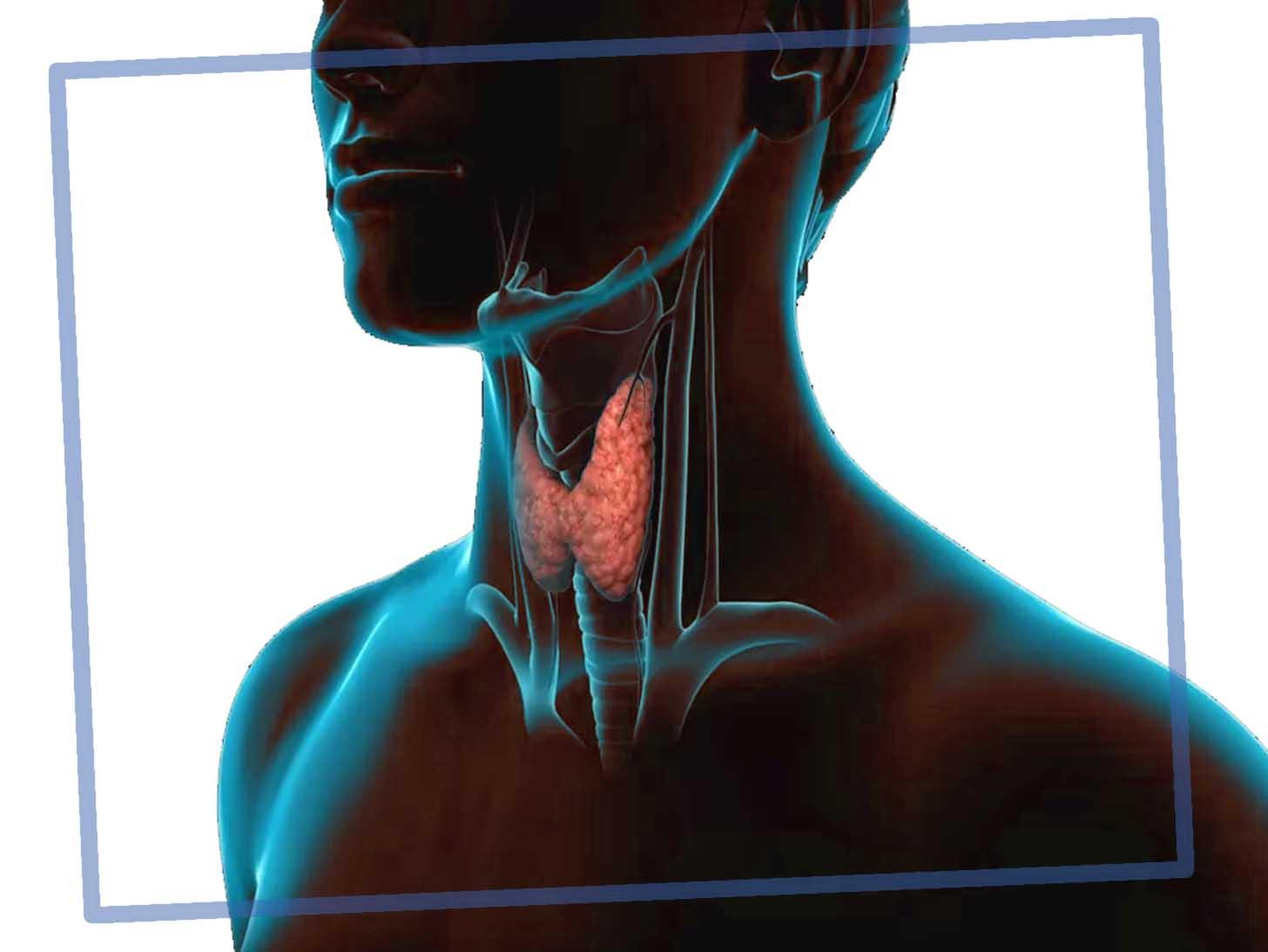 ак лечить щитовидную железу в домашних условиях