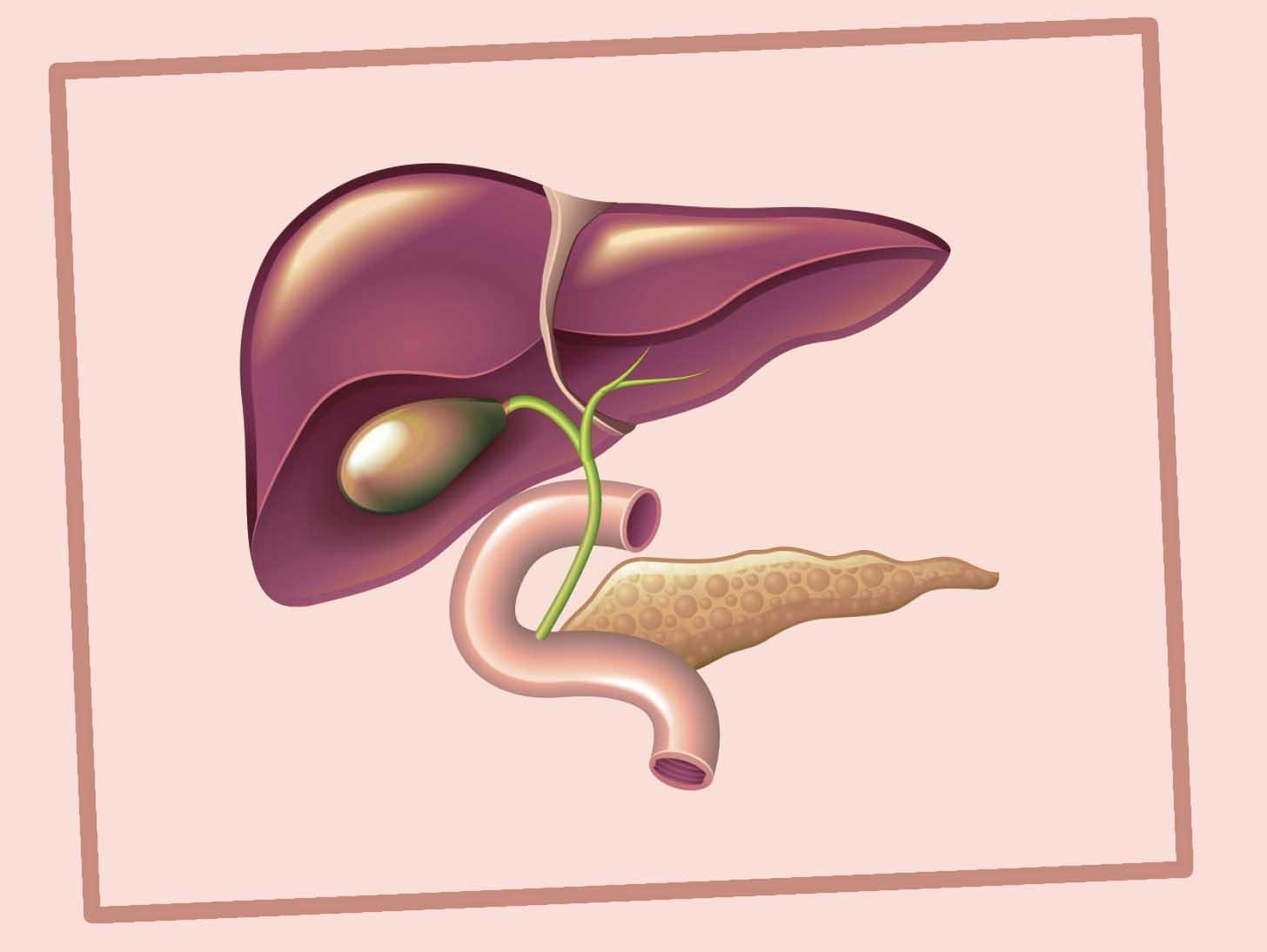 дискинезия желчевыводящих путей симптомы и лечение у взрослых